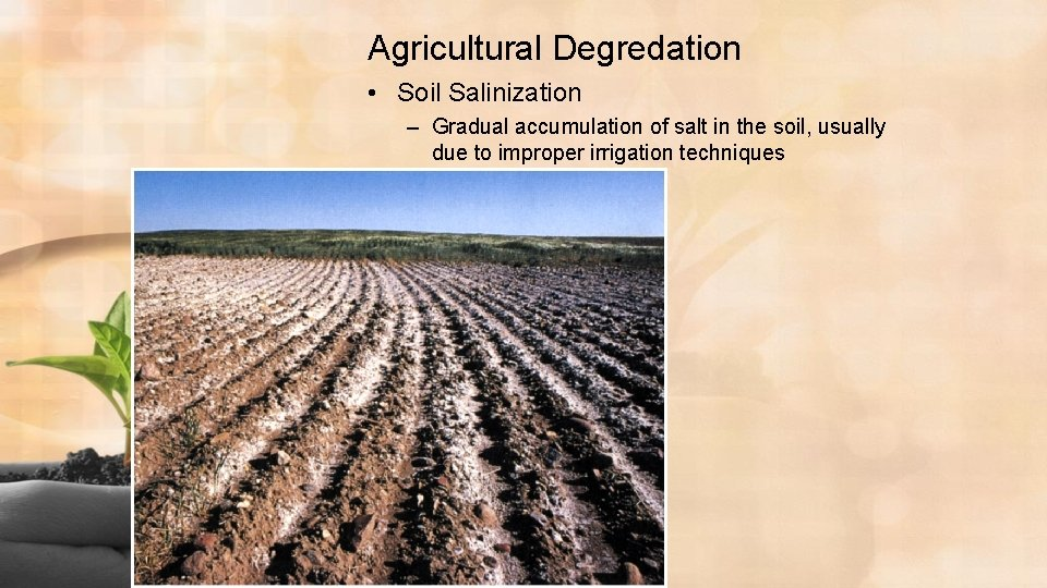 Agricultural Degredation • Soil Salinization – Gradual accumulation of salt in the soil, usually