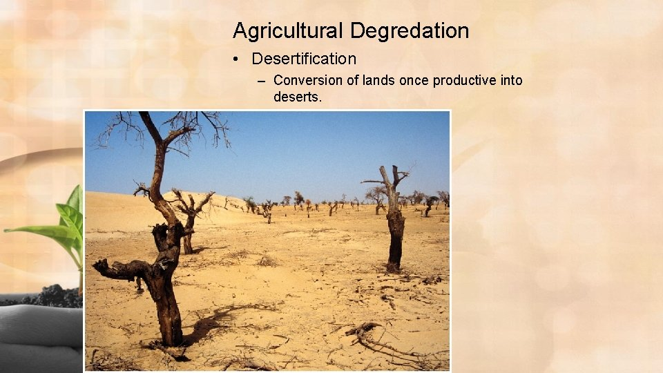 Agricultural Degredation • Desertification – Conversion of lands once productive into deserts.
