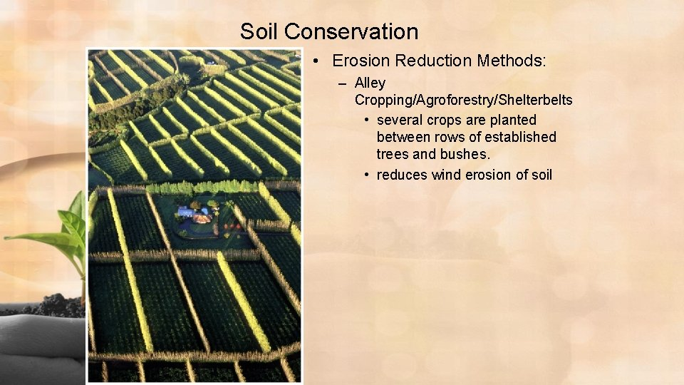 Soil Conservation • Erosion Reduction Methods: – Alley Cropping/Agroforestry/Shelterbelts • several crops are planted