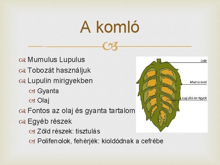 A komló Mumulus Lupulus Tobozát használjuk Lupulin mirigyekben Gyanta Olaj Fontos az olaj és