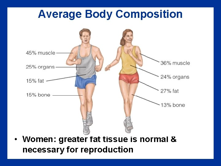 Average Body Composition • Women: greater fat tissue is normal & necessary for reproduction