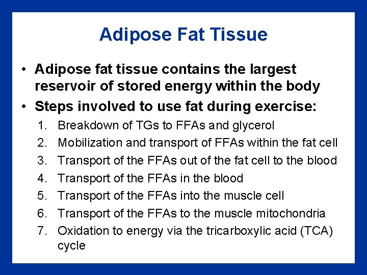 Adipose Fat Tissue • Adipose fat tissue contains the largest reservoir of stored energy