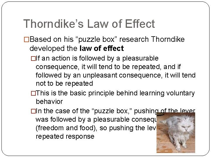 """Thorndike's Law of Effect �Based on his """"puzzle box"""" research Thorndike developed the law"""