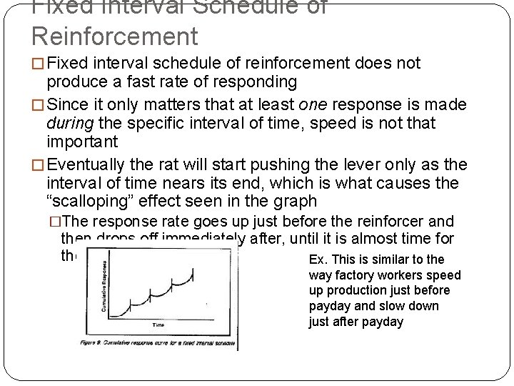 Fixed Interval Schedule of Reinforcement � Fixed interval schedule of reinforcement does not produce