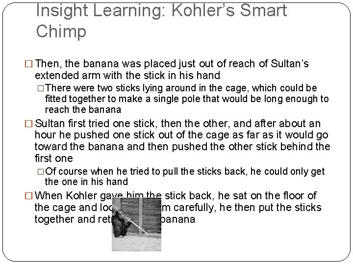 Insight Learning: Kohler's Smart Chimp � Then, the banana was placed just out of