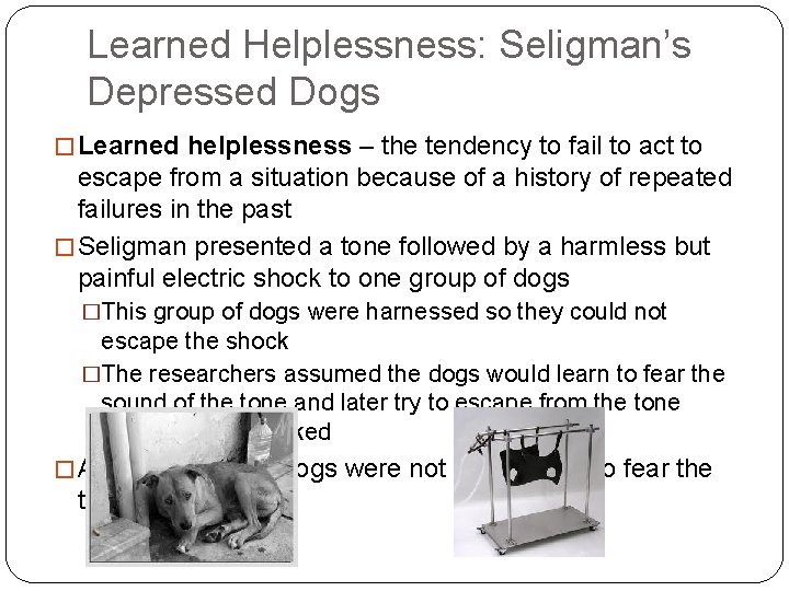 Learned Helplessness: Seligman's Depressed Dogs � Learned helplessness – the tendency to fail to