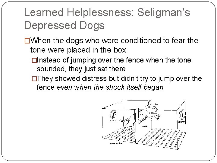 Learned Helplessness: Seligman's Depressed Dogs �When the dogs who were conditioned to fear the