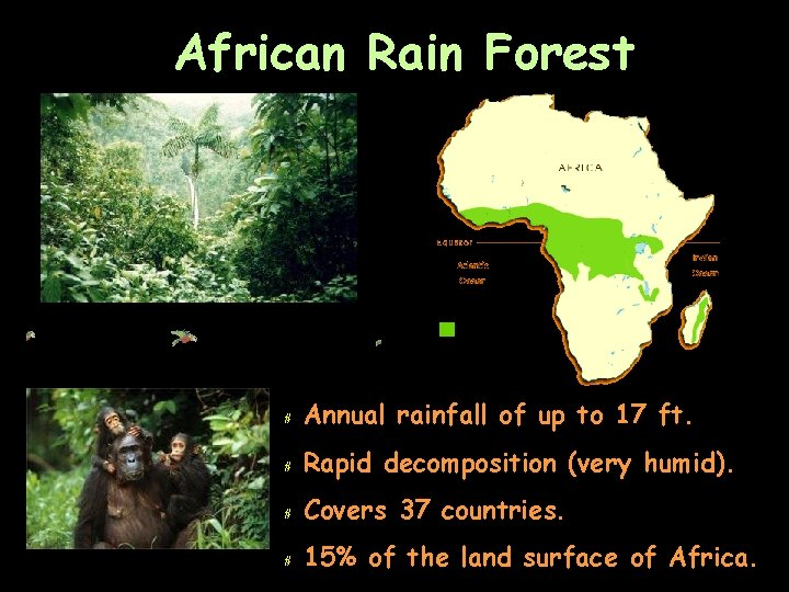 African Rain Forest # Annual rainfall of up to 17 ft. # Rapid decomposition