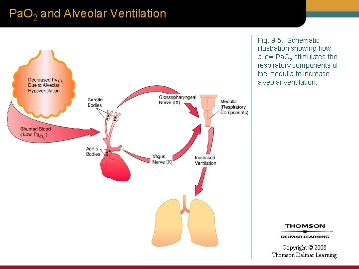 Pa. O 2 and Alveolar Ventilation Fig. 9 -5. Schematic illustration showing how a