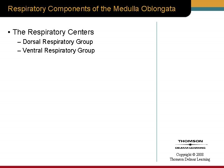 Respiratory Components of the Medulla Oblongata • The Respiratory Centers – Dorsal Respiratory Group