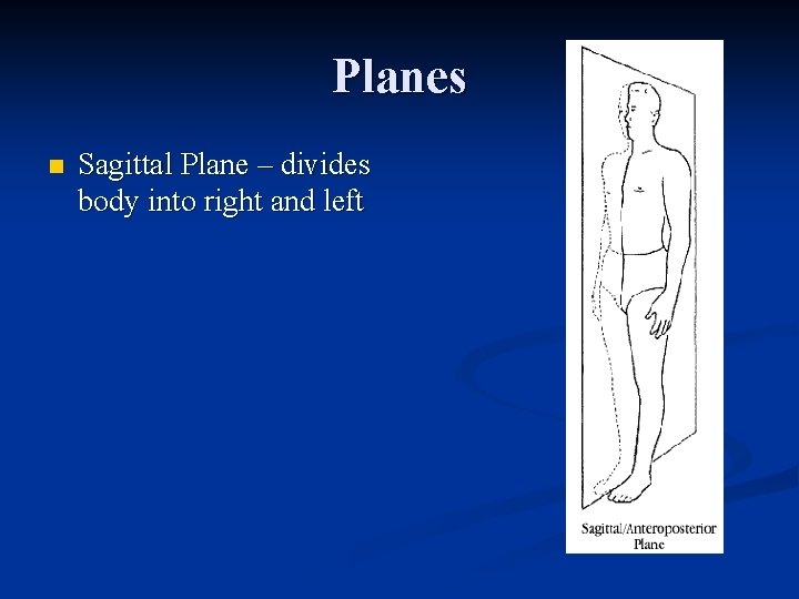 Planes n Sagittal Plane – divides body into right and left
