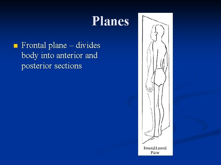 Planes n Frontal plane – divides body into anterior and posterior sections