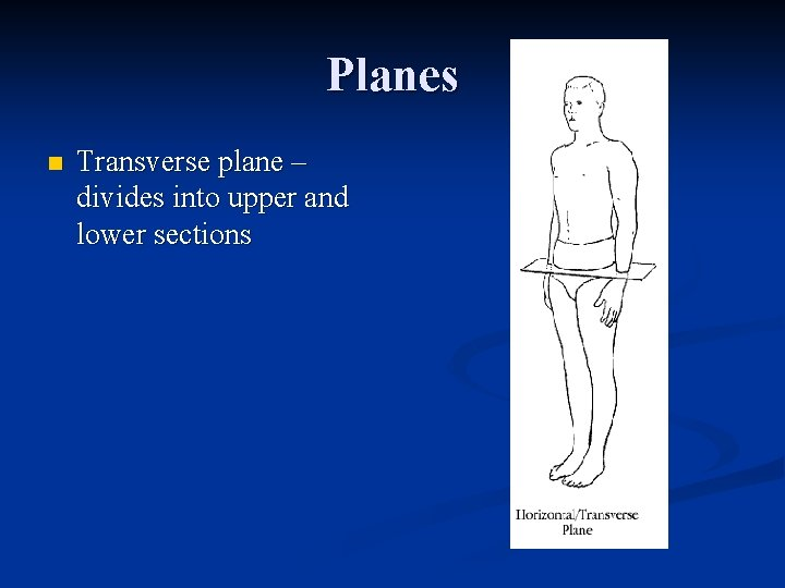 Planes n Transverse plane – divides into upper and lower sections