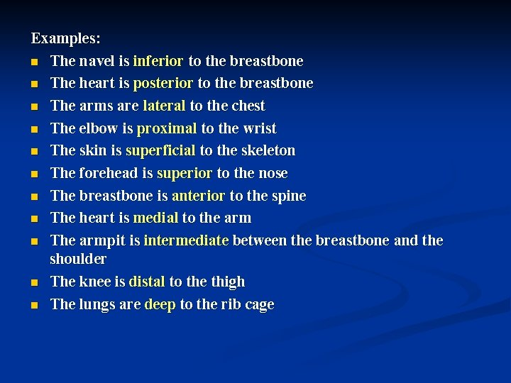 Examples: n The navel is inferior to the breastbone n The heart is posterior