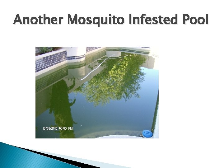 Another Mosquito Infested Pool