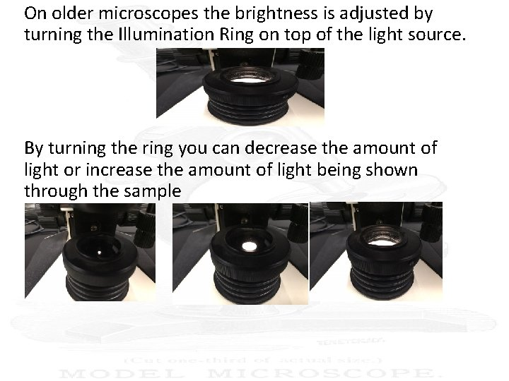 On older microscopes the brightness is adjusted by turning the Illumination Ring on top