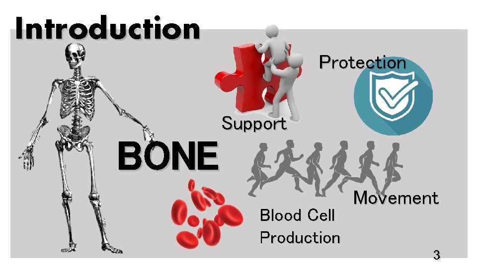 Introduction Protection Support BONE Blood Cell Production Movement 3