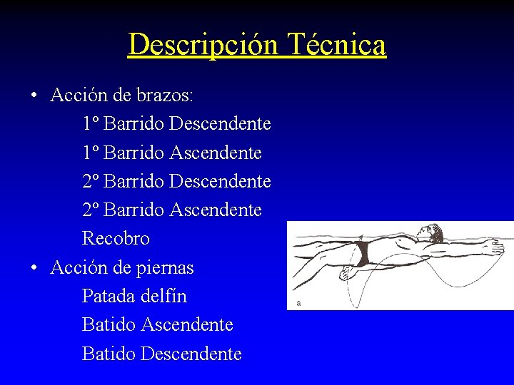 Descripción Técnica • Acción de brazos: 1º Barrido Descendente 1º Barrido Ascendente 2º Barrido