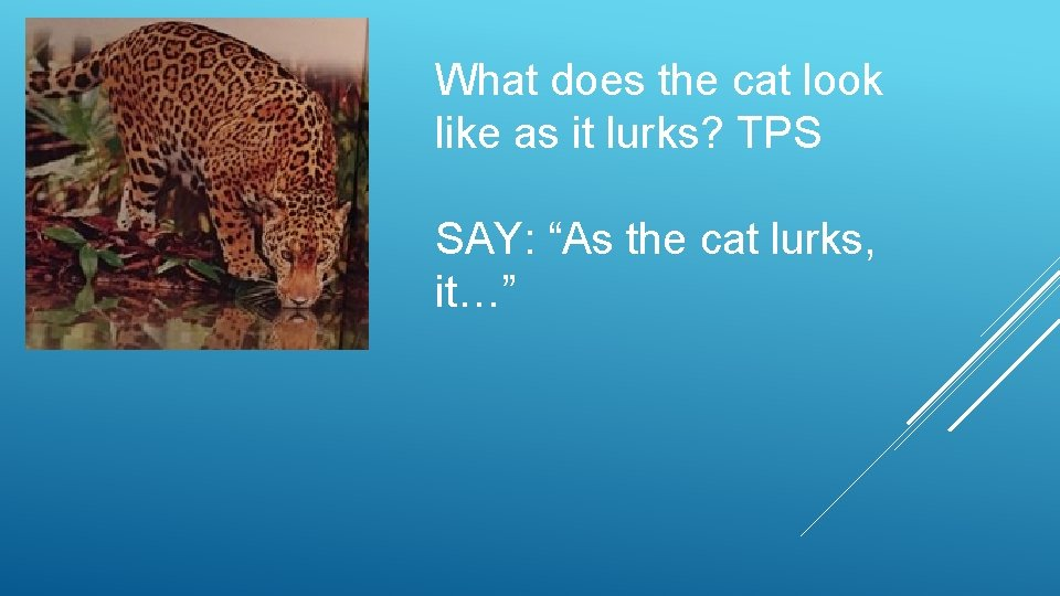 "What does the cat look like as it lurks? TPS SAY: ""As the cat"