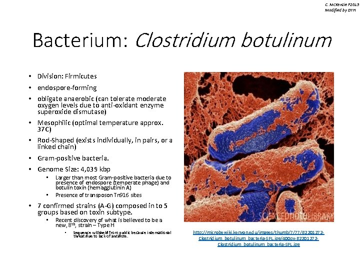 C. Mc. Kenzie F 2013 Modified by DYH Bacterium: Clostridium botulinum • Division: Firmicutes