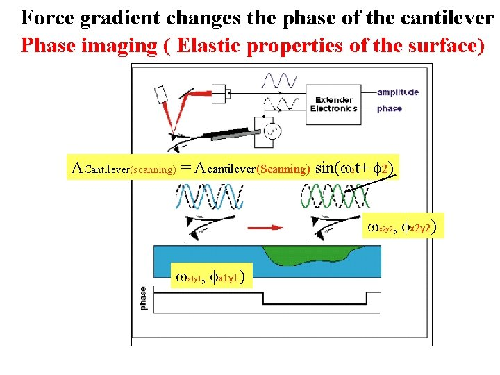 Force gradient changes the phase of the cantilever Phase imaging ( Elastic properties of