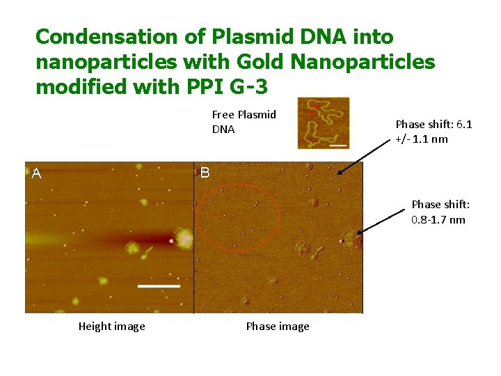 Condensation of Plasmid DNA into nanoparticles with Gold Nanoparticles modified with PPI G-3 Free