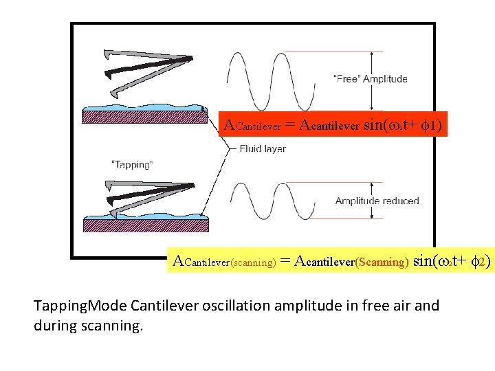 ACantilever = Acantilever sin( t+ 1) 1 ACantilever(scanning) = Acantilever(Scanning) sin( 2 t+ 2)