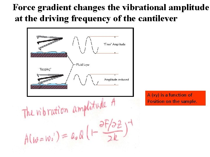 Force gradient changes the vibrational amplitude at the driving frequency of the cantilever A