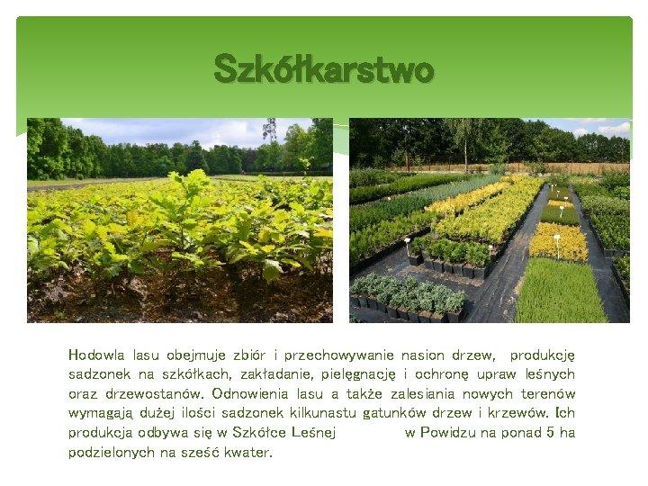 Szkółkarstwo Hodowla lasu obejmuje zbiór i przechowywanie nasion drzew, produkcję sadzonek na szkółkach, zakładanie,