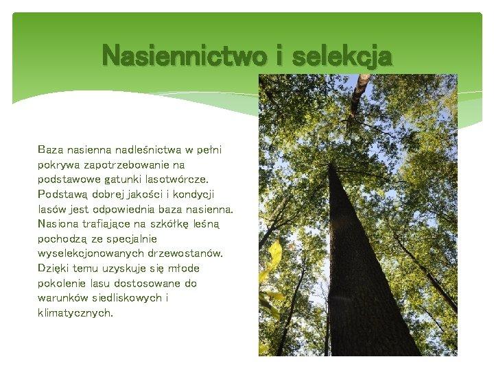 Nasiennictwo i selekcja Baza nasienna nadleśnictwa w pełni pokrywa zapotrzebowanie na podstawowe gatunki lasotwórcze.