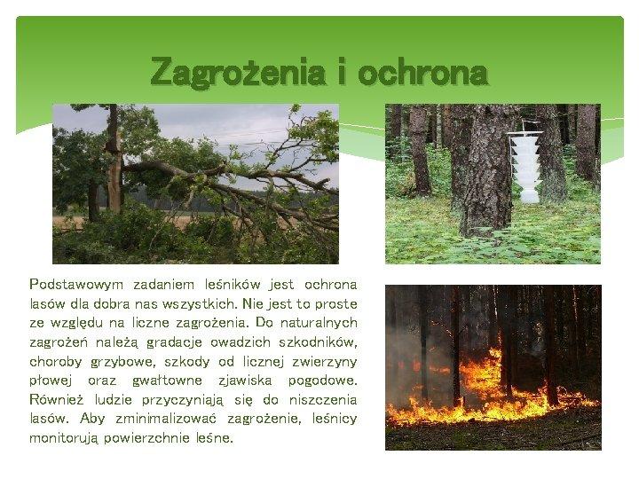 Zagrożenia i ochrona Podstawowym zadaniem leśników jest ochrona lasów dla dobra nas wszystkich. Nie
