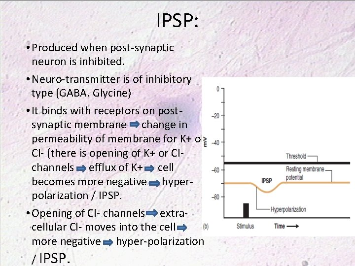 IPSP: • Produced when post-synaptic neuron is inhibited. • Neuro-transmitter is of inhibitory type