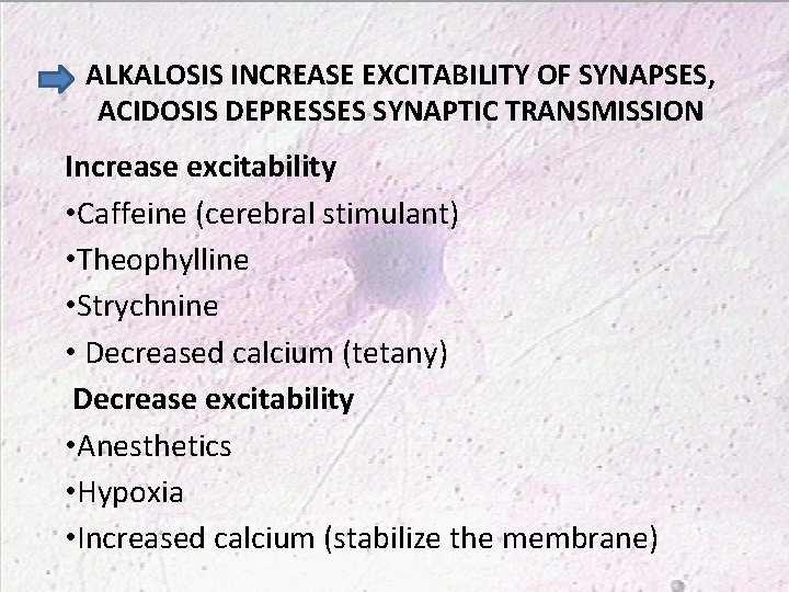 ALKALOSIS INCREASE EXCITABILITY OF SYNAPSES, ACIDOSIS DEPRESSES SYNAPTIC TRANSMISSION Increase excitability • Caffeine (cerebral