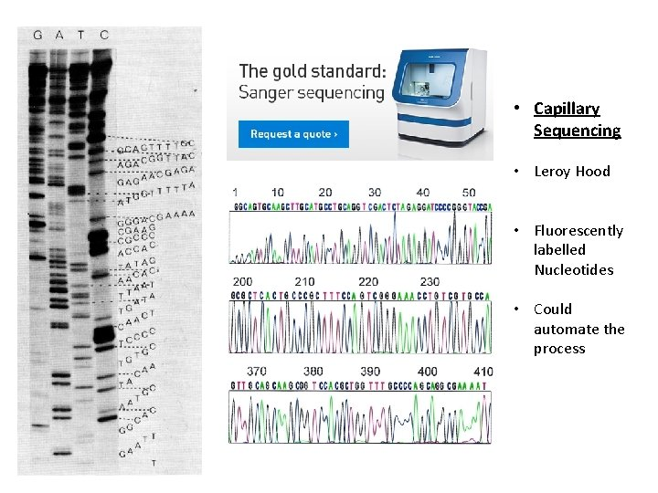 • Capillary Sequencing • Leroy Hood • Fluorescently labelled Nucleotides • Could automate
