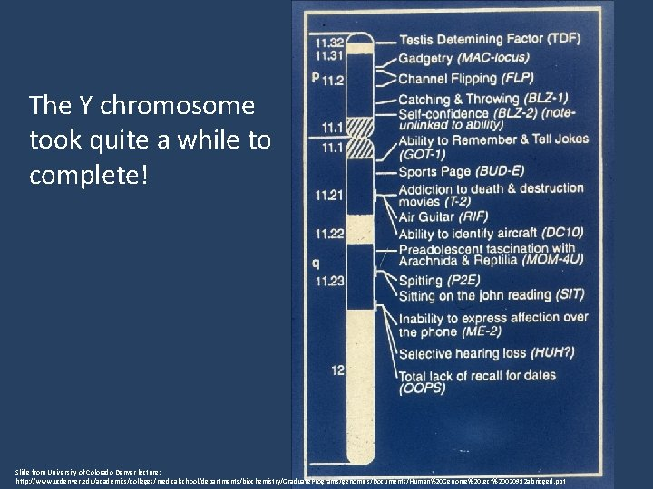 The Y chromosome took quite a while to complete! Slide from University of Colorado