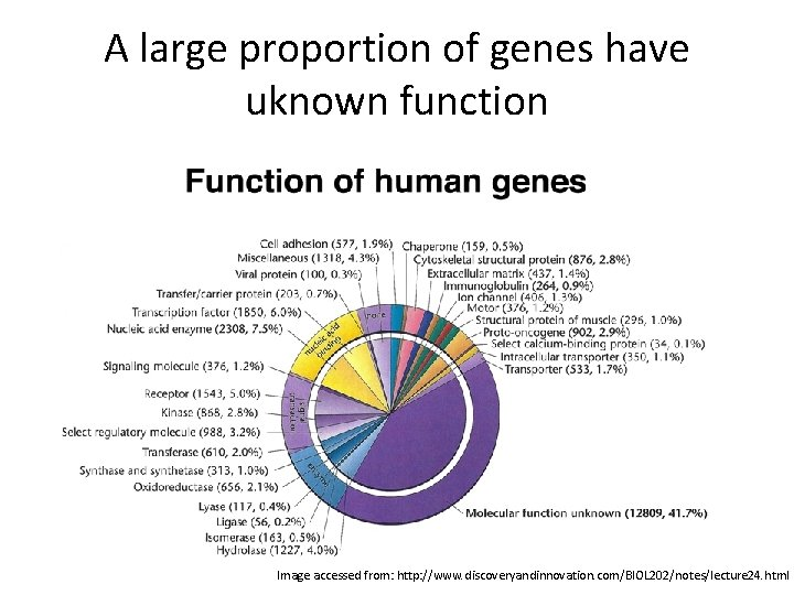 A large proportion of genes have uknown function Image accessed from: http: //www. discoveryandinnovation.