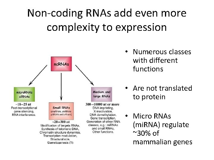 Non-coding RNAs add even more complexity to expression • Numerous classes with different functions
