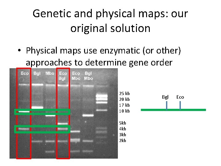 Genetic and physical maps: our original solution • Physical maps use enzymatic (or other)