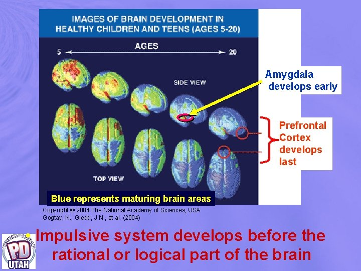Amygdala develops early Prefrontal Cortex develops last Blue represents maturing brain areas Copyright ©