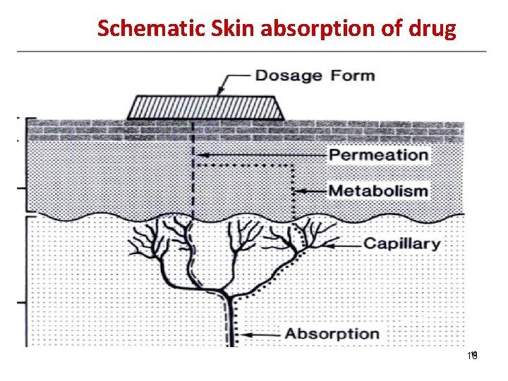 Schematic Skin absorption of drug 18 18