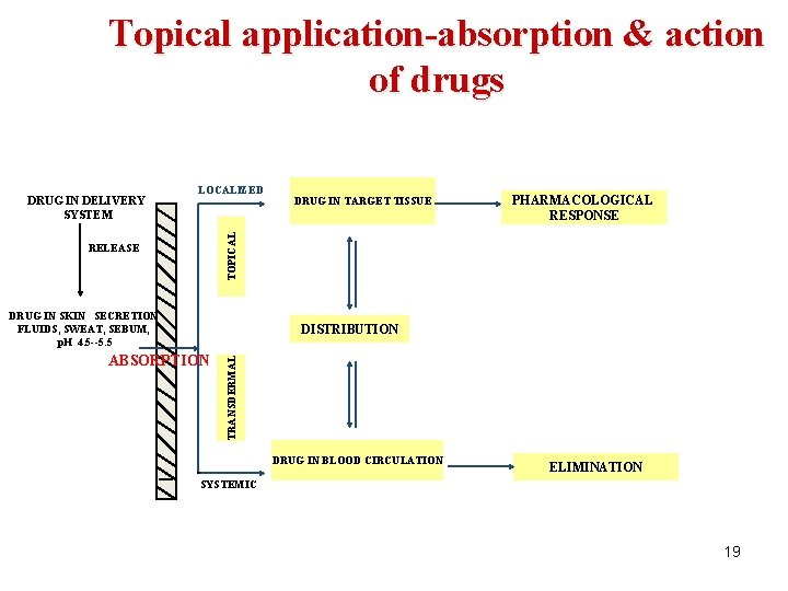 Topical application-absorption & action of drugs LOCALIZED DRUG IN TARGET TISSUE PHARMACOLOGICAL RESPONSE TOPICAL