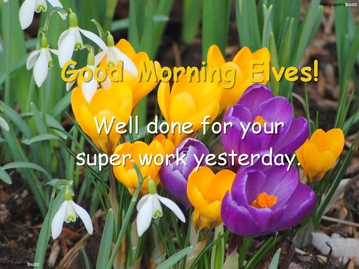 Good Morning Elves! Well done for your super work yesterday.