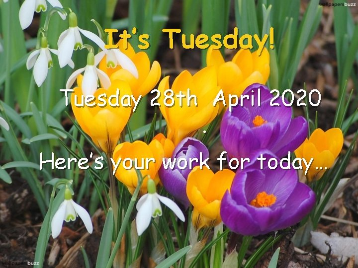 It's Tuesday! Tuesday 28 th April 2020. Here's your work for today…