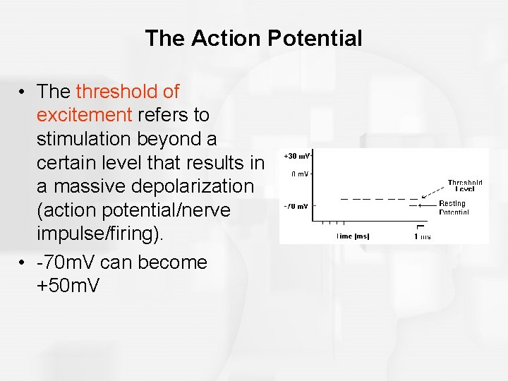 The Action Potential • The threshold of excitement refers to stimulation beyond a certain