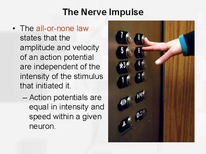 The Nerve Impulse • The all-or-none law states that the amplitude and velocity of