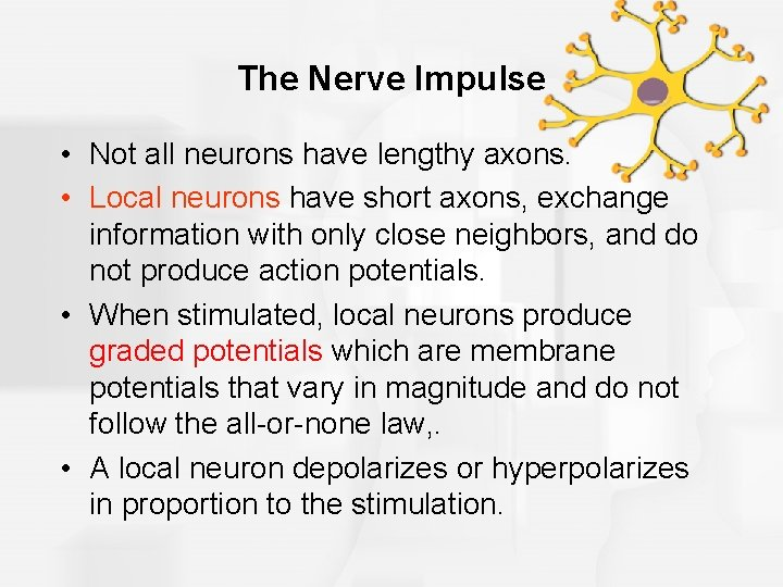 The Nerve Impulse • Not all neurons have lengthy axons. • Local neurons have