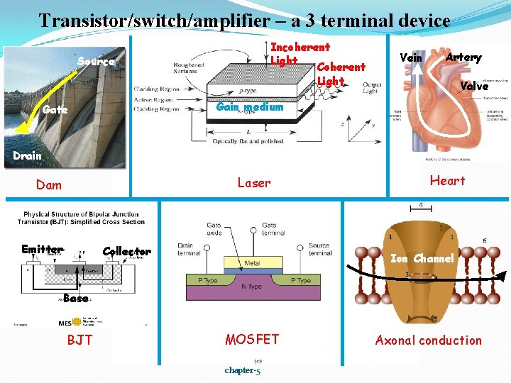 Transistor/switch/amplifier – a 3 terminal device Incoherent Light Coherent Light Source Vein Artery Valve