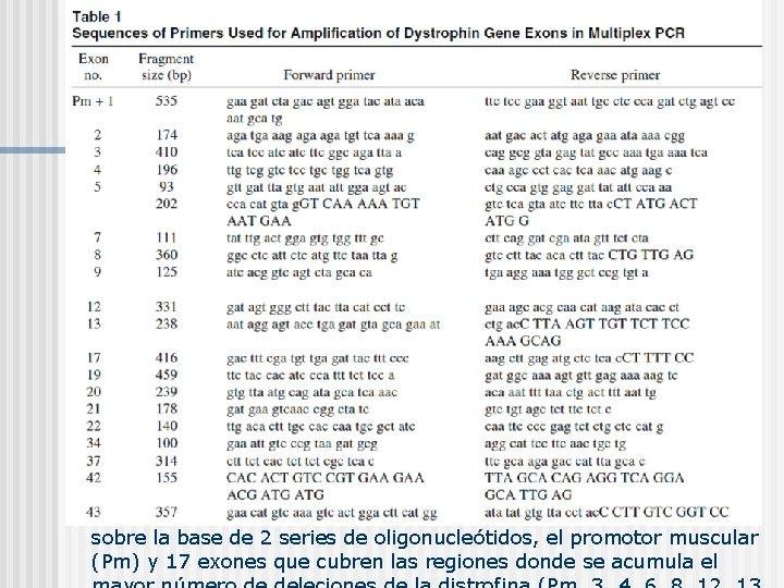sobre la base de 2 series de oligonucleótidos, el promotor muscular (Pm) y 17