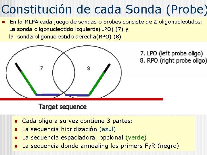 Constitución de cada Sonda (Probe) n En la MLPA cada juego de sondas o