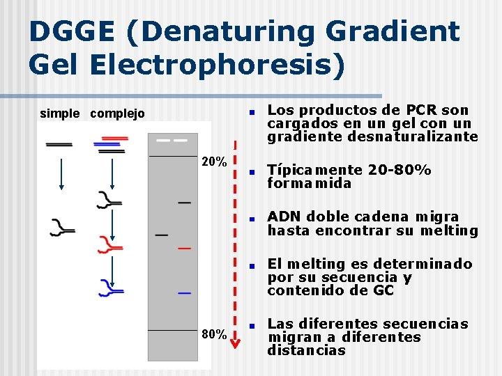 DGGE (Denaturing Gradient Gel Electrophoresis) Los productos de PCR son cargados en un gel